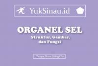 Organel-Organel Sel