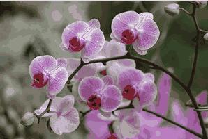 famili monokotil orchidaceae
