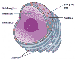 organel sel tumbuhan nukleus