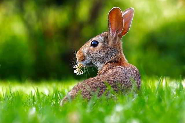 contoh laporan hasil observasi kelinci