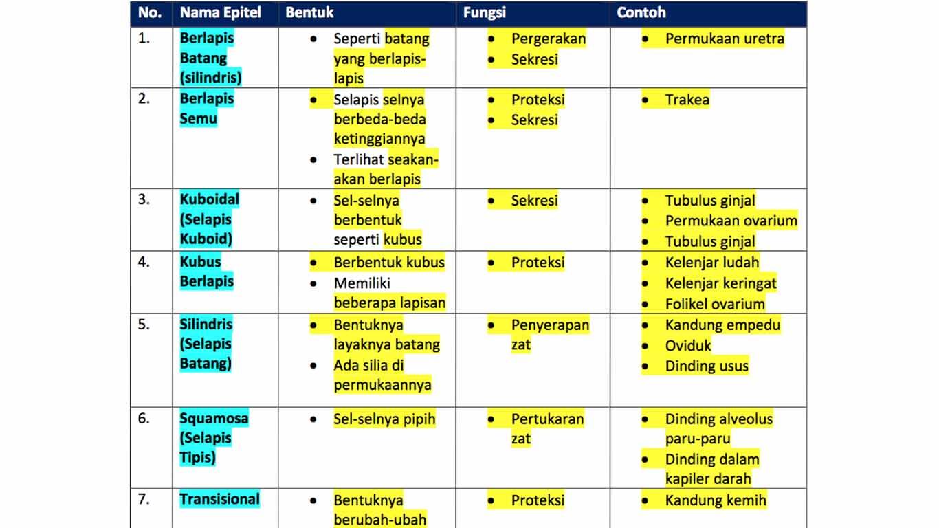 tabel-jaringan-epitel