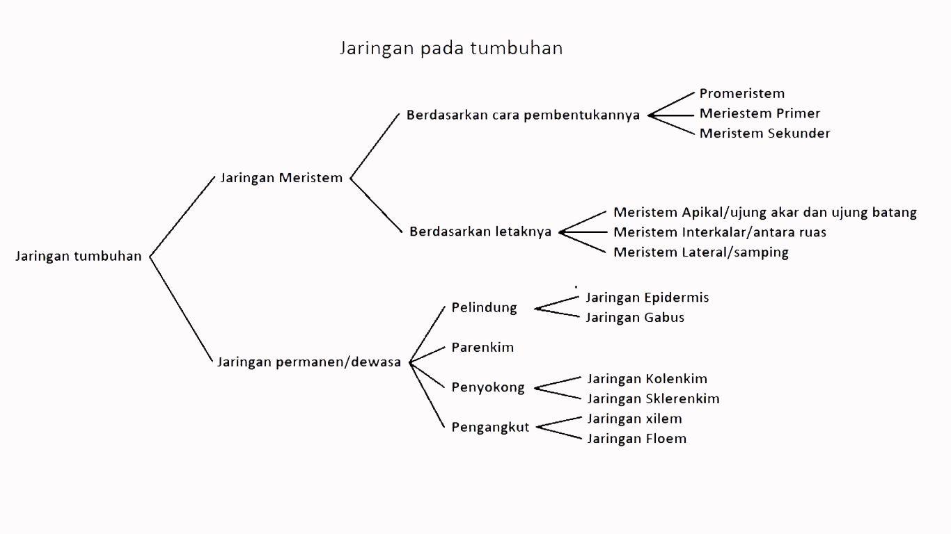 artikel jaringan tumbuhan