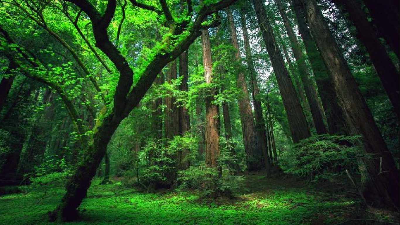5 Contoh Teks Eksposisi Singkat (Lingkungan, Ekonomi ...
