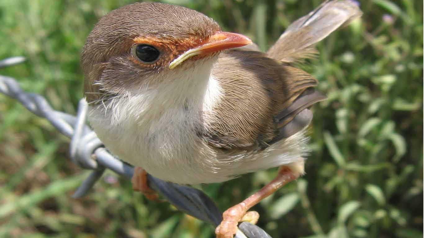 Burung (Aves)