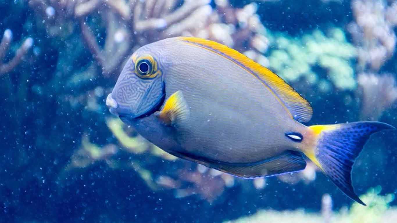 Ikan (pisces)
