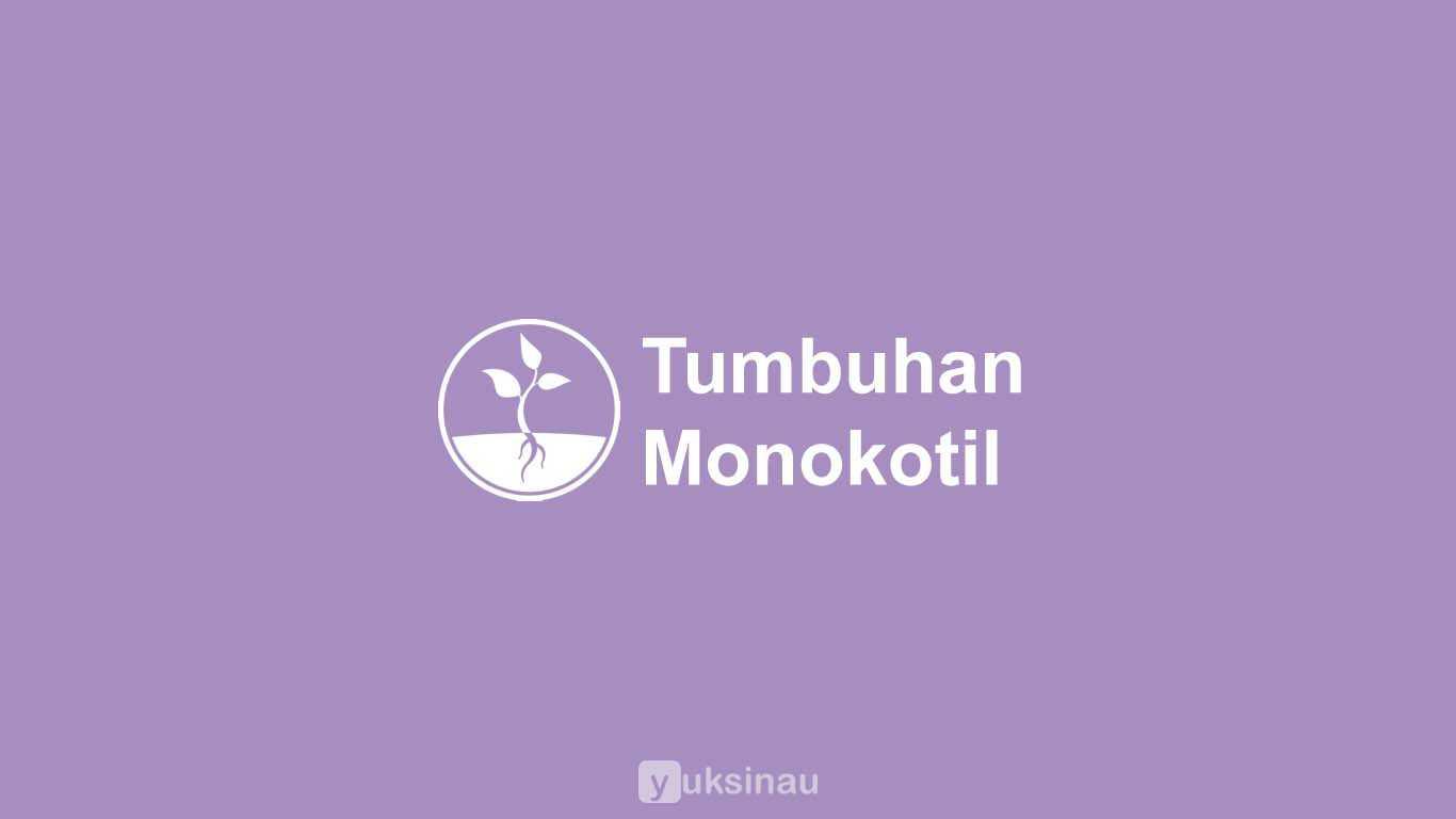 Tumbuhan Monokotil