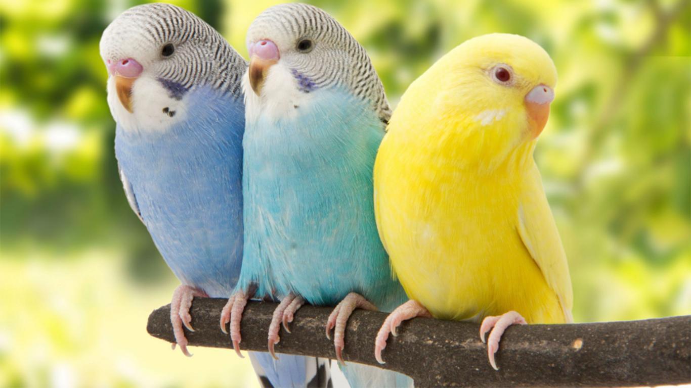Ciri – ciri Hewan Aves