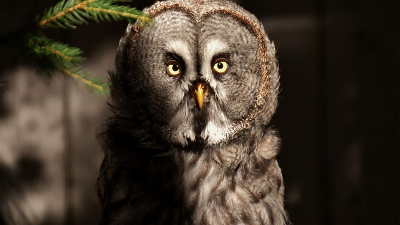 Keanekaragaman Aves di Indonesia