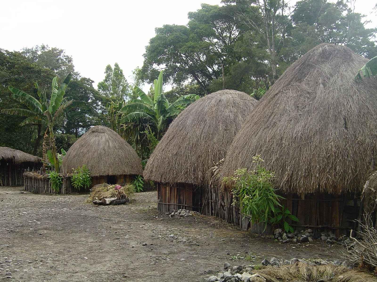 Rumah Adat Papua Nama Keunikan Gambar