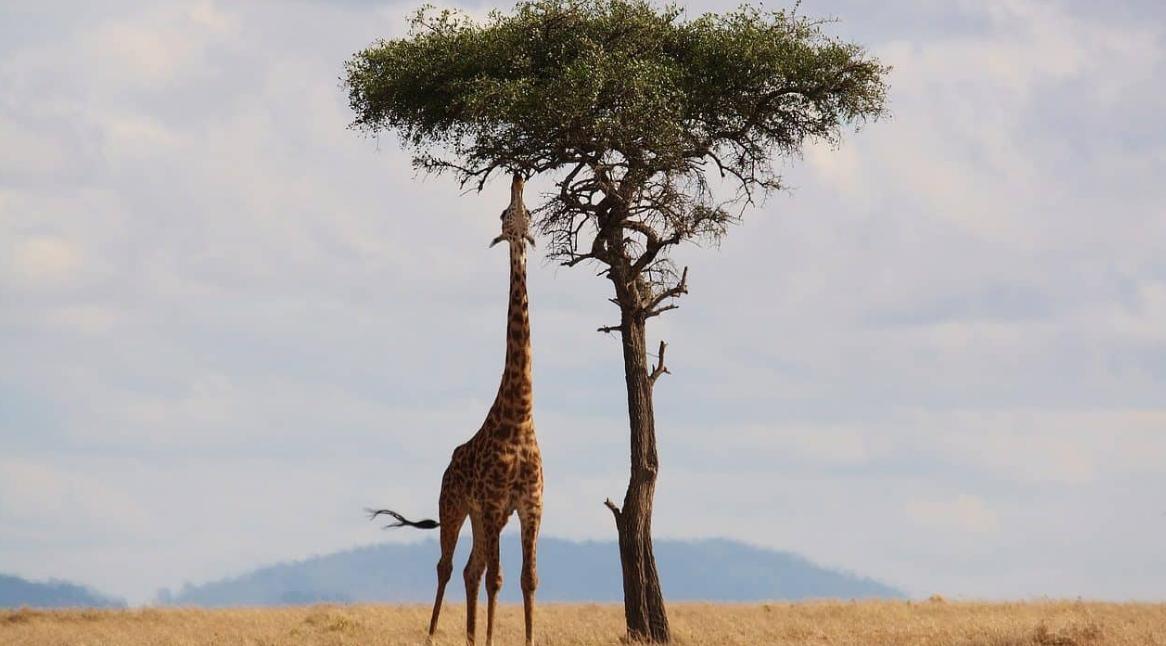 contoh hewan herbivora, karnivora, omnivora