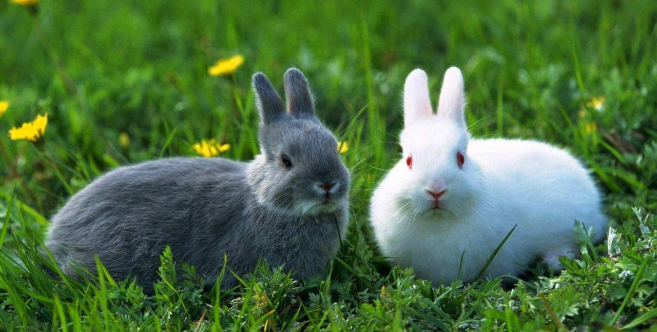 hewan herbivora adalah