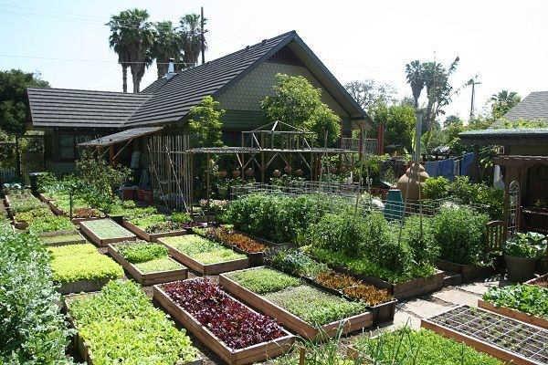 pertanian pekarangan