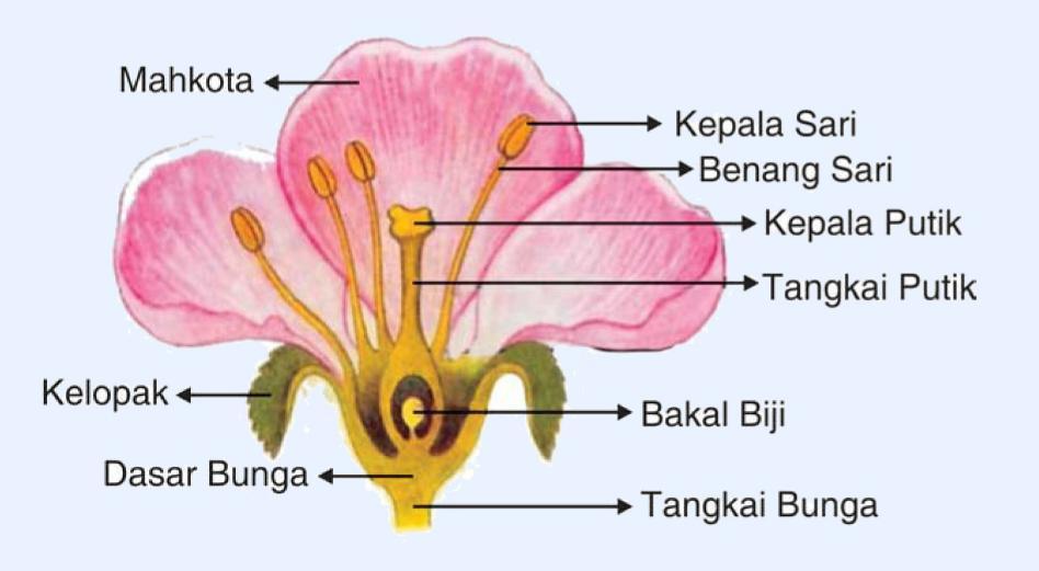 bunga adalah