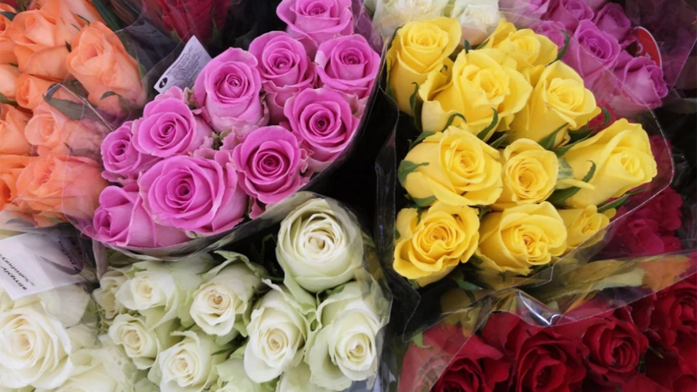 contoh teks laporan hasil observasi tentang bunga mawar