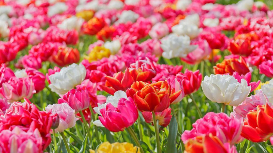 pembahasan tentang bunga