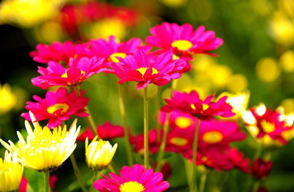 pengertian bunga dan contohnya