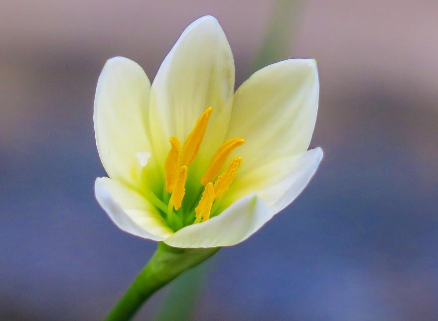 pengertian bunga sempurna