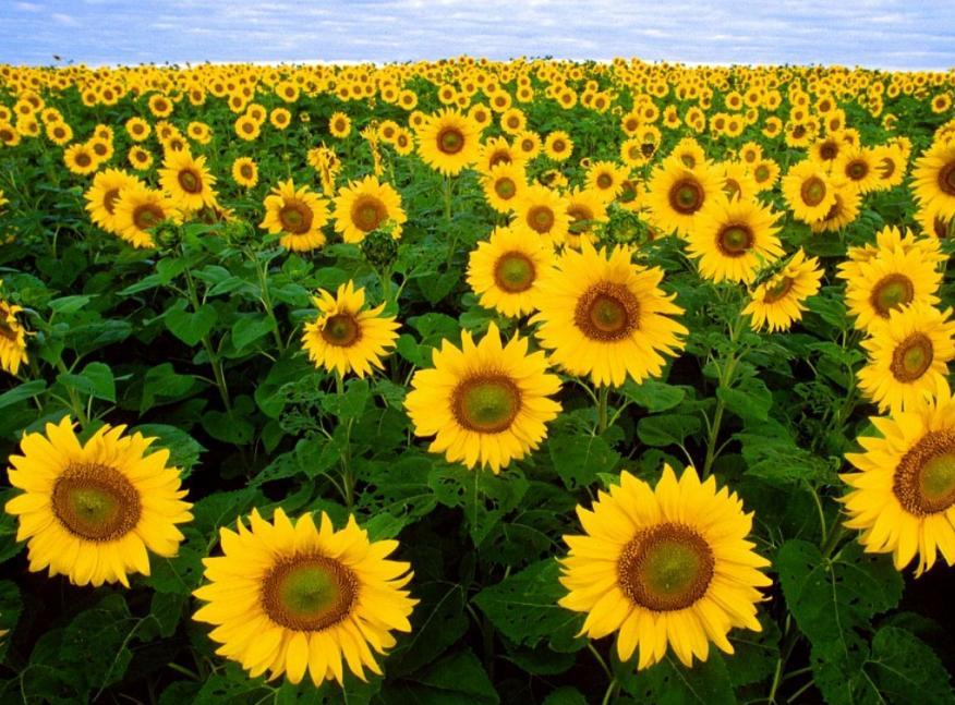pengertian tangkai bunga