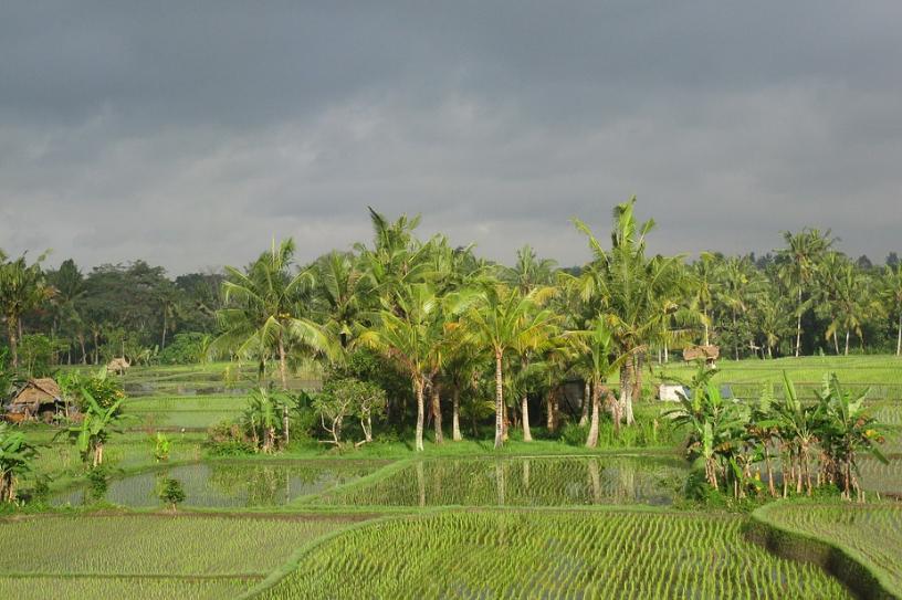 Agroklimat Oldeman