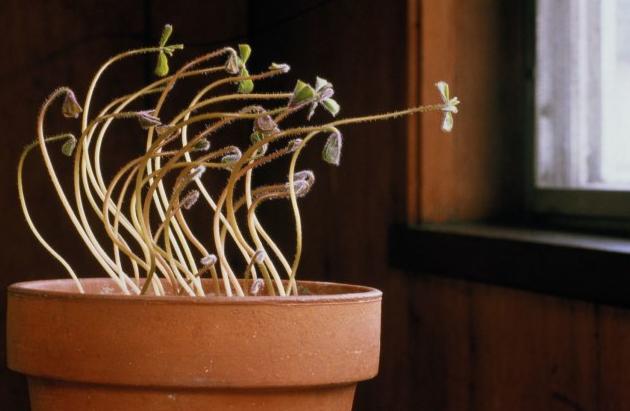 gerak pada tumbuhan beserta gambarnya