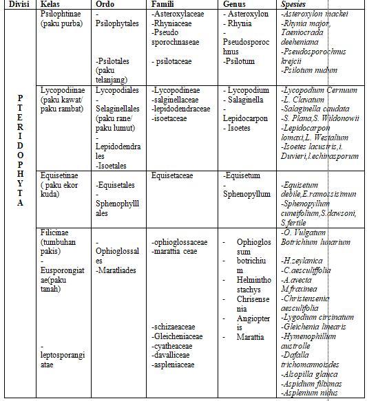 struktur dan peranan pteridophyta