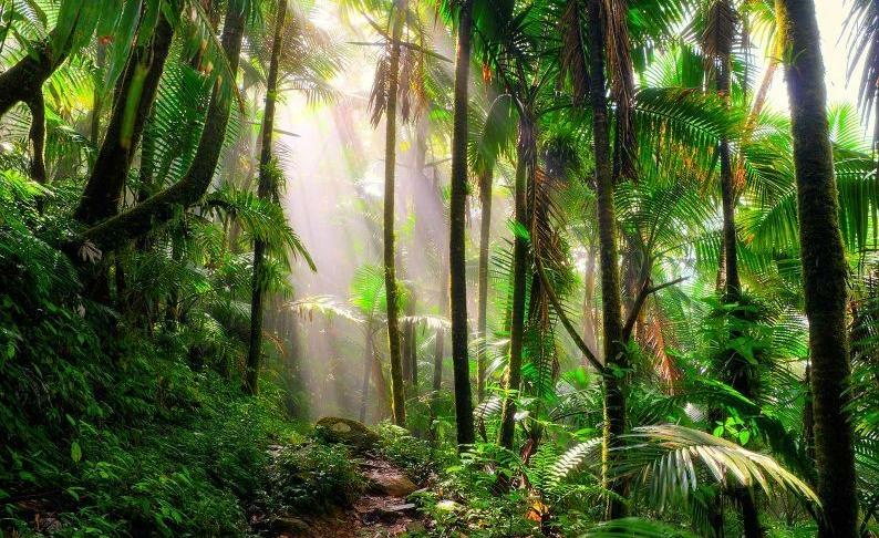 tropis